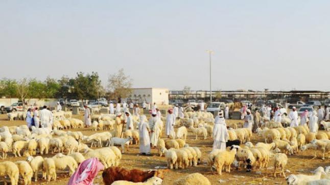 البيئة تعلن المواعيد الجديدة لصرف دعم صغار مربي الماشية